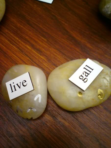 live-gall
